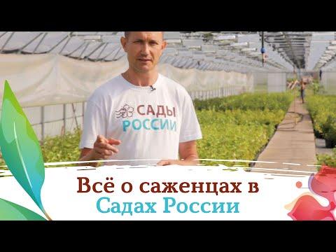 Саженцы из Садов России  - посмотрите сами!