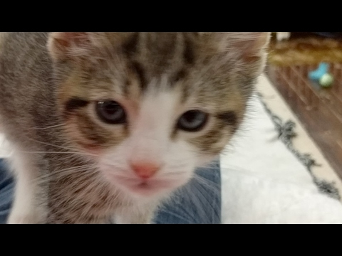 Close Up Kittens 2017-04-25