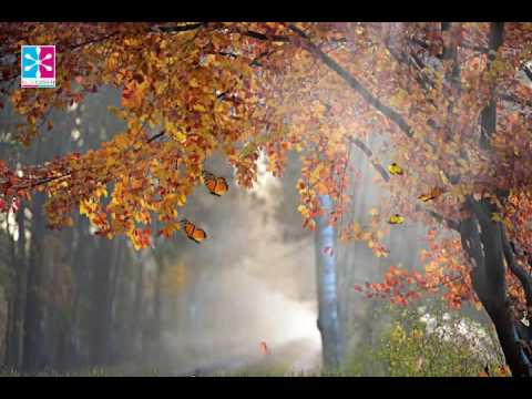 Sad Pan Flute Music, Music for Serenity and Traquility, Lounge Music, Background Music, Beta Waves ☯
