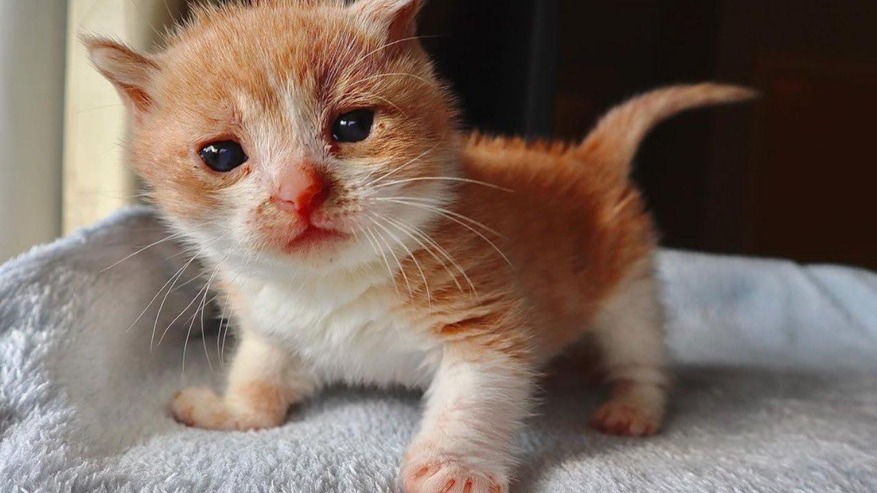 草むらにひとりぼっちでいた子猫。障害を抱えていても強く生きる姿に心打たれる【感動 動物】