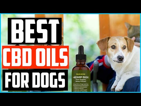 Top 5 Best CBD Oils for Dogs Review in 2020