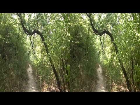 Living Nature (Relaxing) - 3D Side by Side...