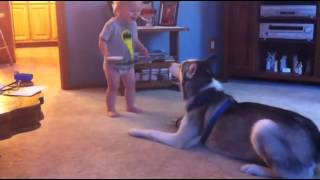 New Funny Animal Videos Compilation 2014 : Baby And Husky Have Deep Conversation Funny Videos