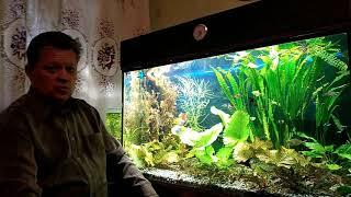 Причины появления диатомовых водорослей в моём 300 литровом аквариуме.