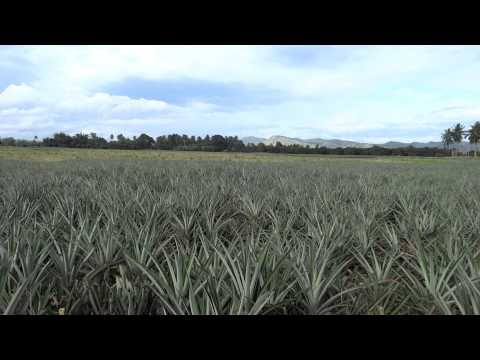 Polomolok - Dole Plantation and Mount Matutum