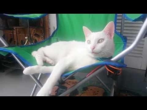 Kona the Talking Cat: Outside Means Birdies!