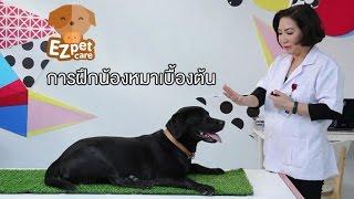 EZ pet care [by Mahidol] การฝึกน้องหมาเบื้องต้น