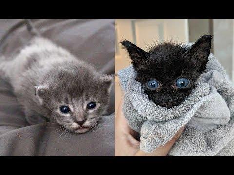 Чёрная кошка родила седых котят, но вскоре их окрас кардинально изменился! Причина проста.