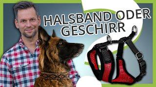 Halsband oder Geschirr ▶ Was ist besser für deinen Hund oder Welpe?