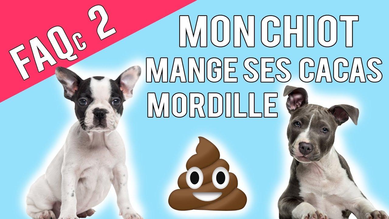 Mon Chiot Mange Ses Crottes Mordille