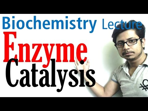 Enzyme catalysis mechanism biochemistry