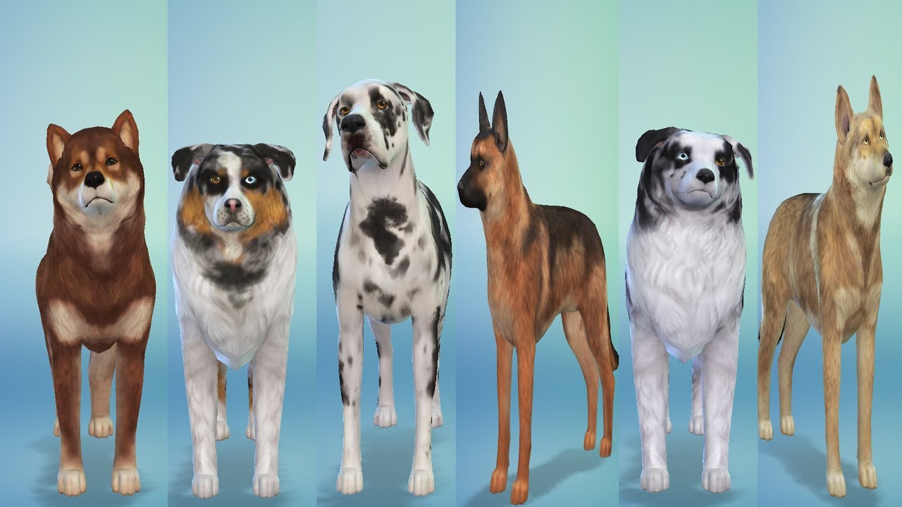 Improved Dogbreeds Sims 4 All Downloadable Youtube