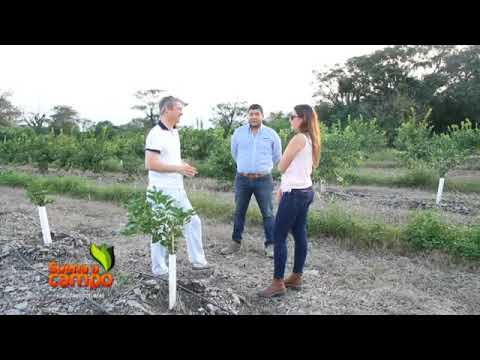 Riego eficiente en campos citrícolas