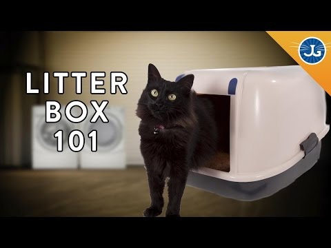 Youre Setting Up Your Litter Box All Wrong!