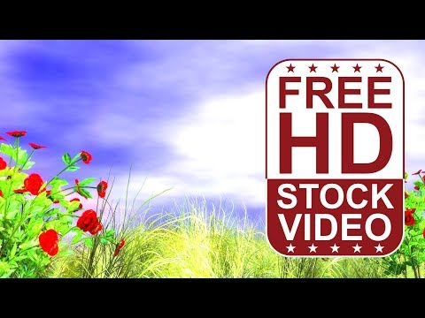 FREE HD video backgrounds – 3D animated red roses and grass with wind effect