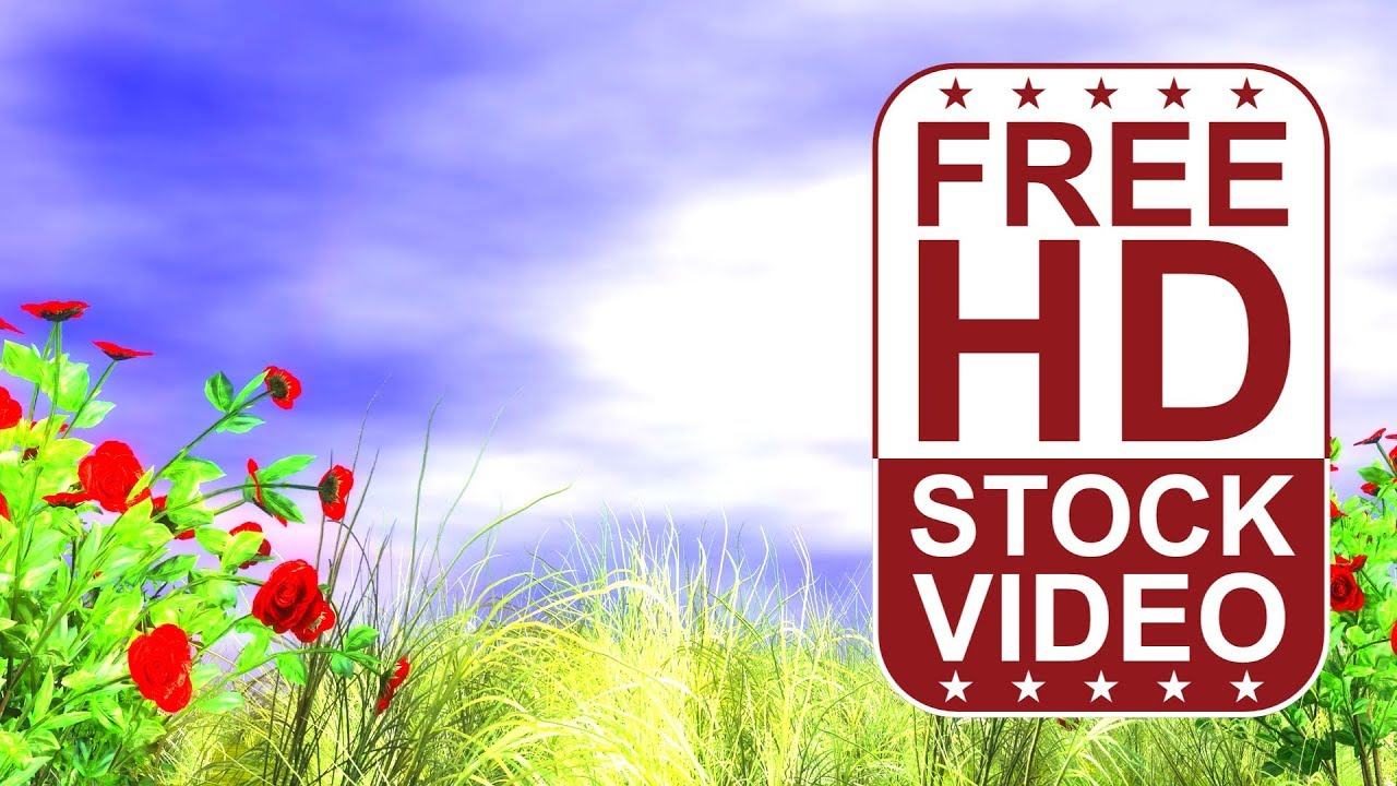 FREE HD Video Backgrounds 3D Animated Red Roses And Grass With Wind Effect
