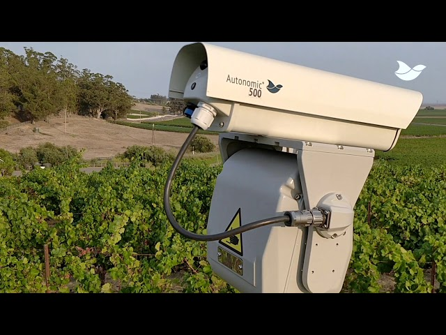Autonomic laser bird deterrent at a California vineyard