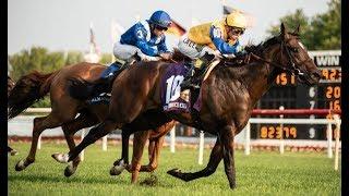 Belmont Stakes Picks & expert horse racing Handicapping Tip Sheet -  Belmont full card June 8