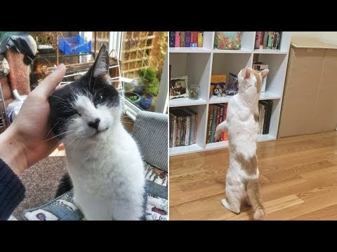 """The Best I Don't Own A Cat"""" Moments That Have Ever Happened To Humans"""" (Part 1)"""