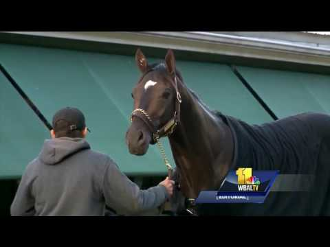 Editorial: The Preakness belongs in Baltimore