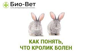 Болезни Кроликов & Как Понять, Что Кролик Болен. Ветклиника Био-Вет