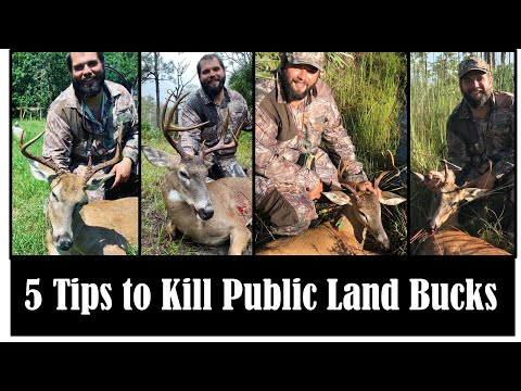 HOW TO HUNT DEER ON FLORIDA PUBLIC LAND And WMAs!!! (Swamp N Stomp Ep. #37)