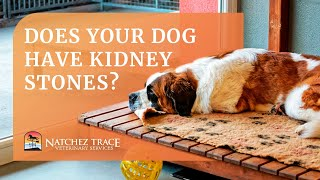 Free Guide! Learn How to Treat Your Dog's Bladder & Kidney Stones