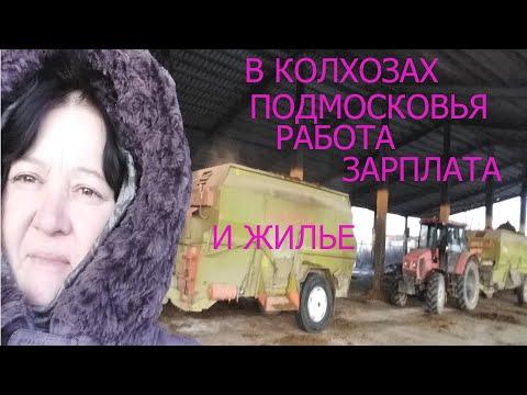 Колхоз и в нем работа зарплата и жилье И это Подмосковье