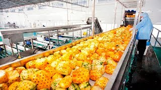 Satisfying Juice Fruit Processing Modern Technology  - Lemon Tipus Pineapple Juice Processing