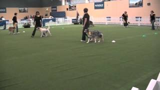 Rockin' Rovers - Dances With Dogs Demo At The Royal Adelaide Show