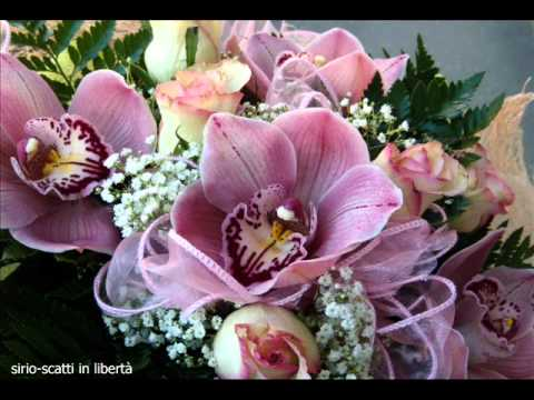 Favoloso fiorie auguri.wmv - YouTube JO81