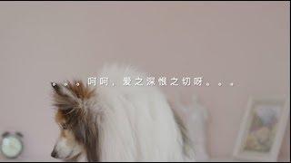 刘欣太让人失望!中国人何时才能坦诚相对这个世界?中美女主播PK闹剧,无知和虚伪哪个更让人反感?