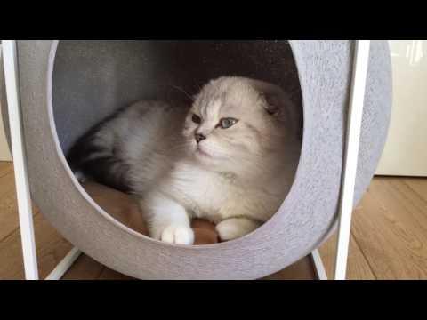 Cat - Chat | BRITIVANA | Hanna Dans Son Cube Meyou