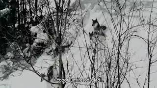 🐺Vučija Priča - Priča o Vuku koji je napustio čopor -The story of Wolf🐺