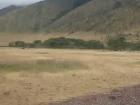 Ngorongoro crater tour, Day tour ngorongoro, ngorongoro day trip