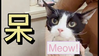Giving my cat a bath! 德文卷毛猫洗澡篇