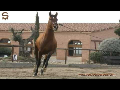 ANDALUSIAN HORSES, PURE SPANISH HORSES