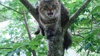 Спасение кошки в Иркутске - 2
