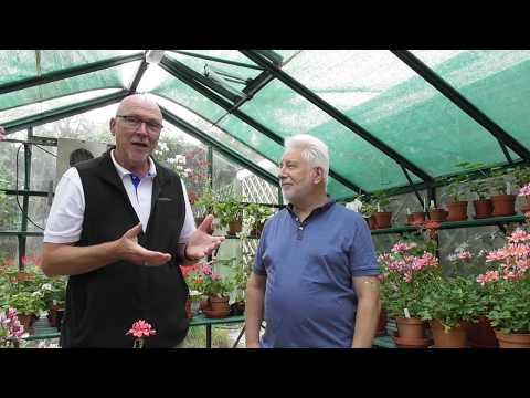 All About Zonartic Pelargoniums Pt 1
