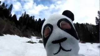 Panda sighting in the Cascade Range — June 17, 2011