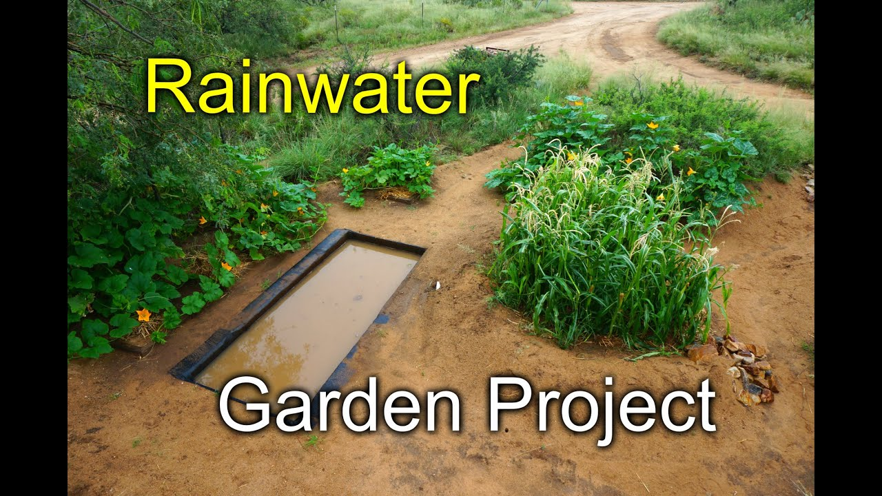 Rainwater Garden Project Desert Permaculture 2015 Youtube