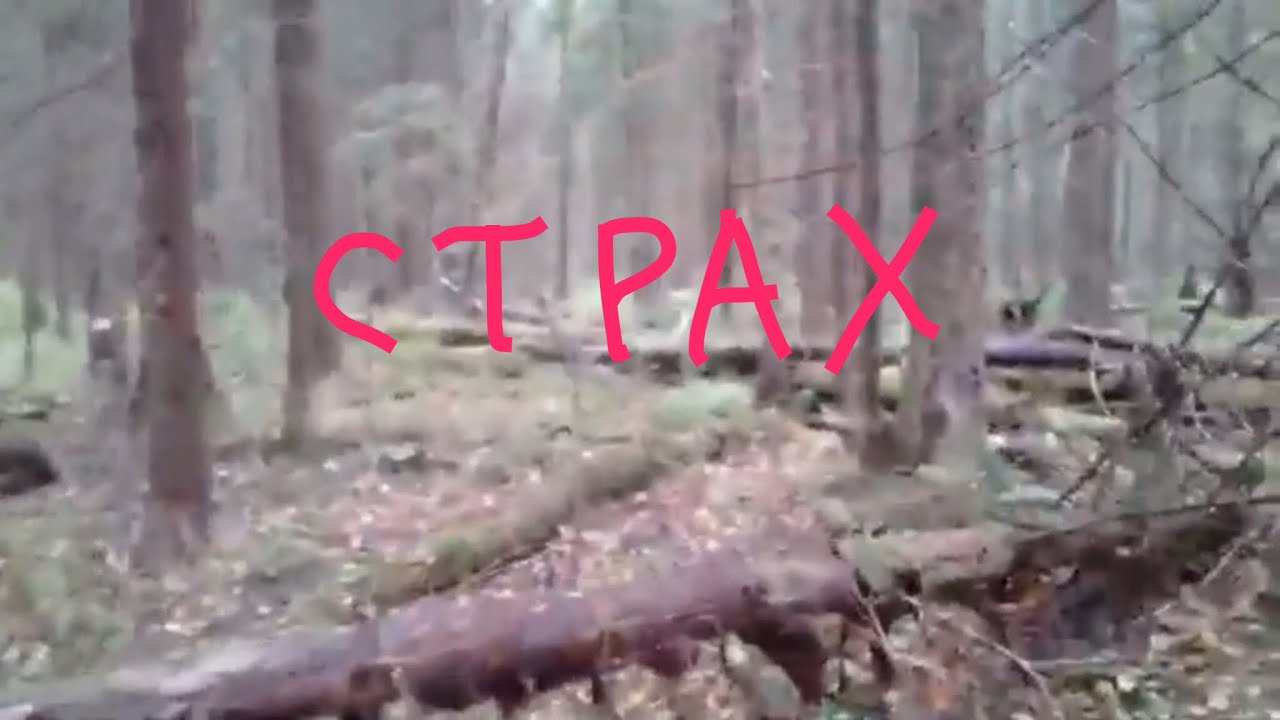 Ужасные звуки русского леса(пранк)