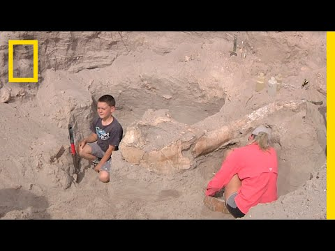 Thumbnail: Boy Trips While Hiking, Discovers Million-Year-Old Fossil | National Geographic