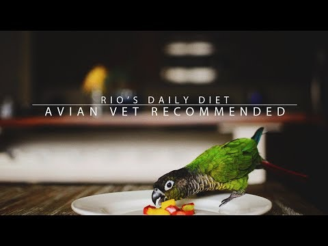 Rio's Daily Diet