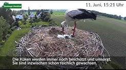 Nest-Kamera zeigt die Kinderstube der Störche im Landkreis Harburg