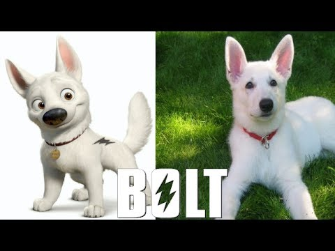 Bolt In Real Life ALL CHARACTERS 2017 #disney