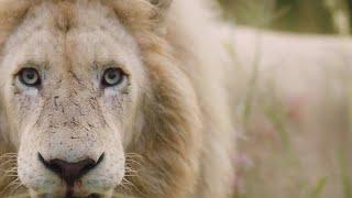 operation-fang-the-lions-lion-whisperer-membership