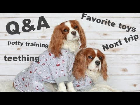 DOG Q&A | Get to know us and most asked questions