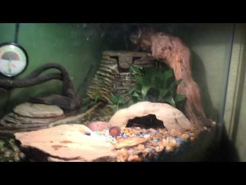 The Best Community Reptile Tank