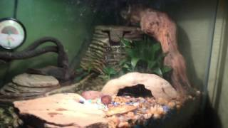The Best Community Reptile Tank